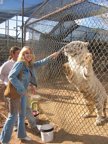 Candice Night with tiger